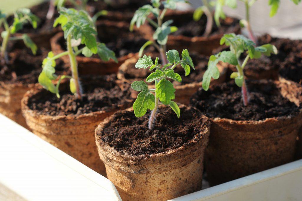 pots à semis en carton